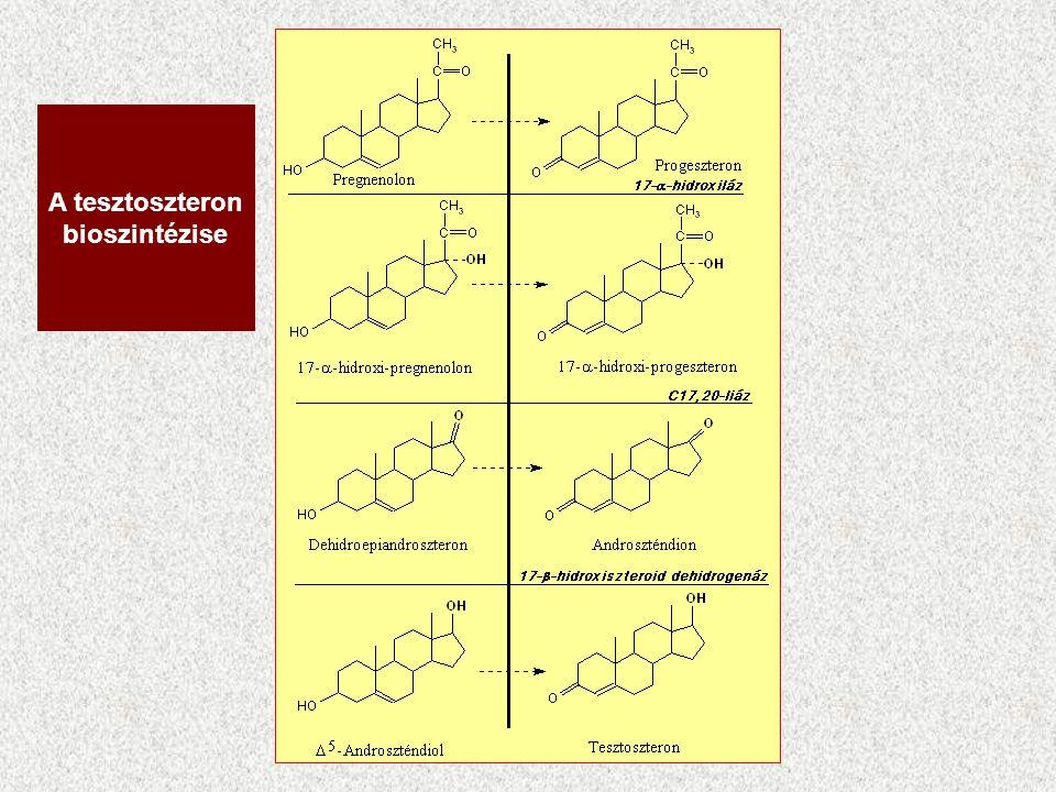 A tesztoszteron bioszintézise