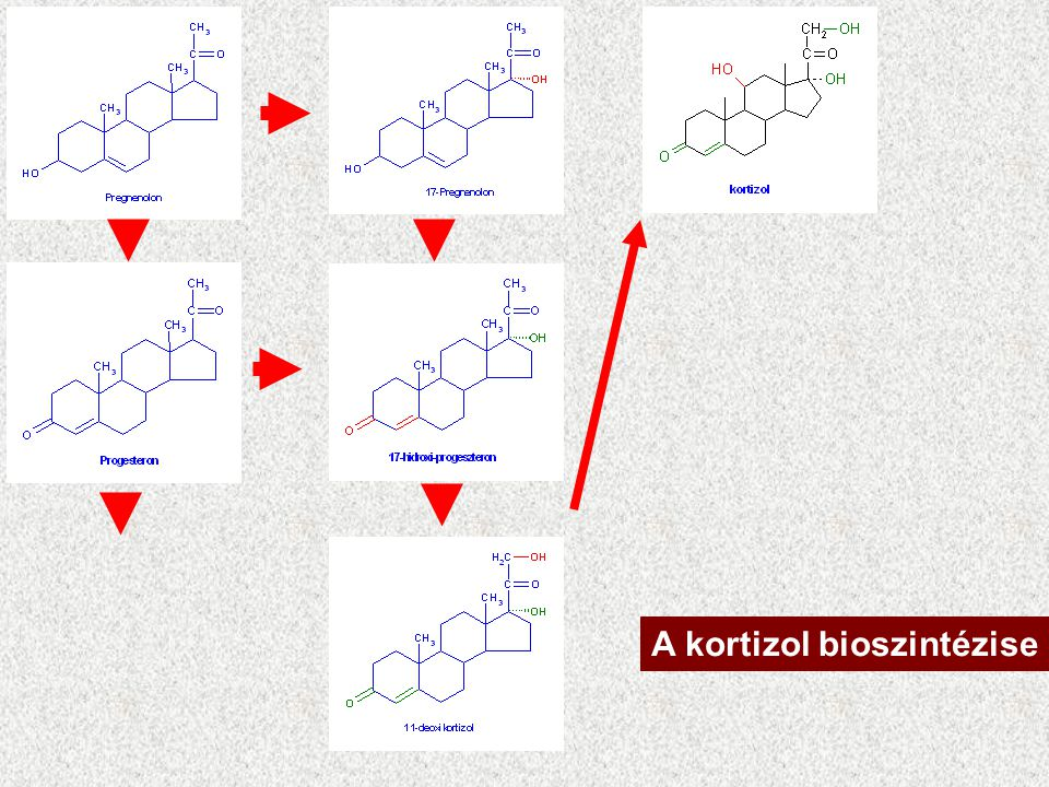 A kortizol bioszintézise