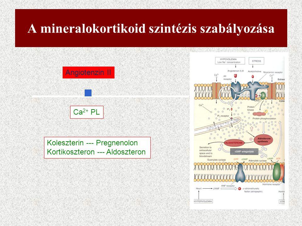 A mineralokortikoid szintézis szabályozása