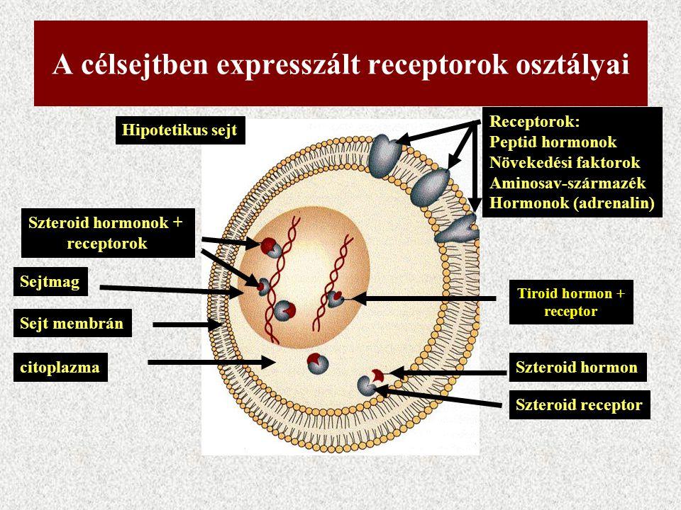 A célsejtben expresszált receptorok osztályai
