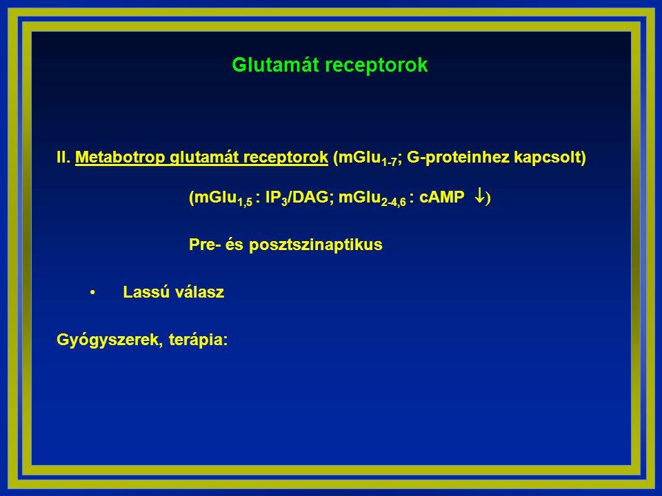 Glutamát receptorok II. Metabotrop glutamát receptorok (mGlu1-7; G-proteinhez kapcsolt) (mGlu1,5 : IP3/DAG; mGlu2-4,6 : cAMP )