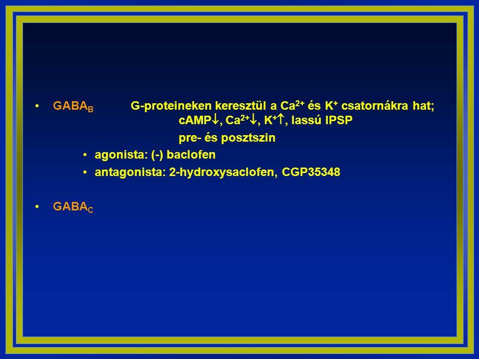 GABAB. G-proteineken keresztül a Ca2+ és K+ csatornákra hat;
