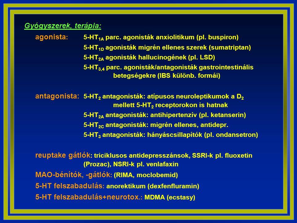 Gyógyszerek, terápia: agonista: 5-HT1A parc. agonisták anxiolitikum (pl. buspiron) 5-HT1D agonisták migrén ellenes szerek (sumatriptan)