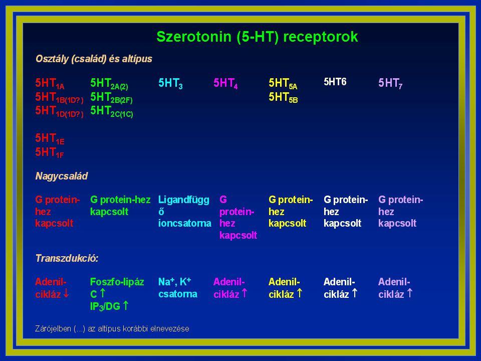 Szerotonin (5-HT) receptorok