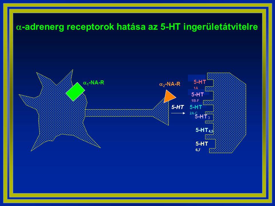 a-adrenerg receptorok hatása az 5-HT ingerületátvitelre