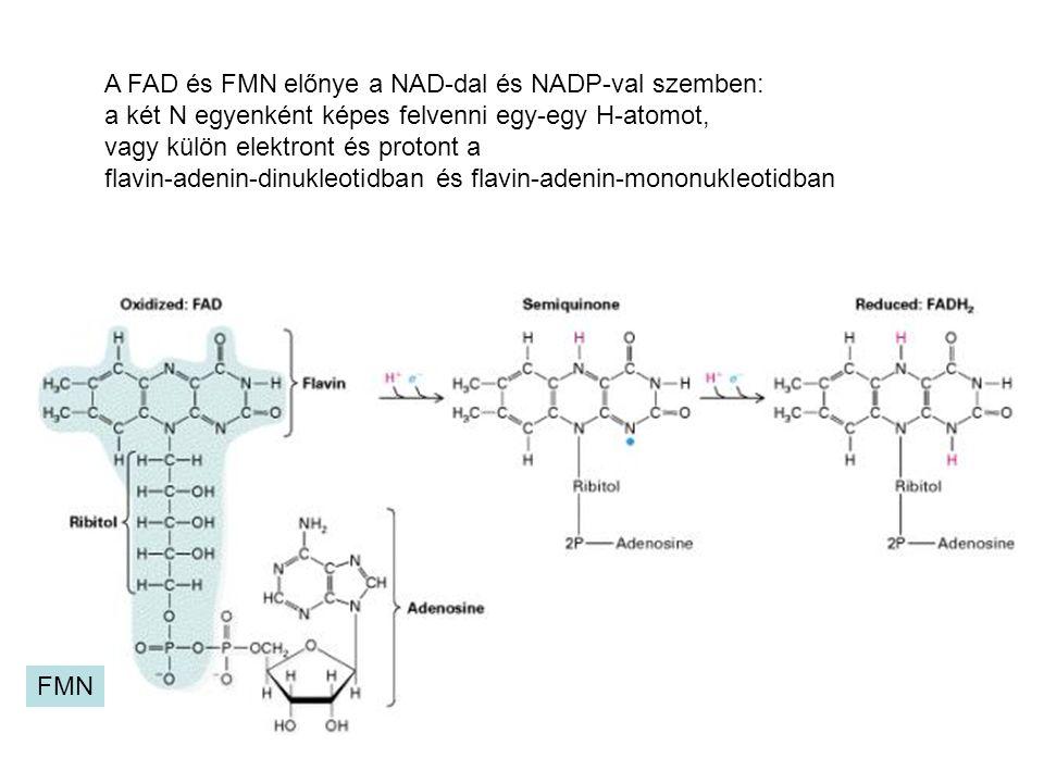 A FAD és FMN előnye a NAD-dal és NADP-val szemben:
