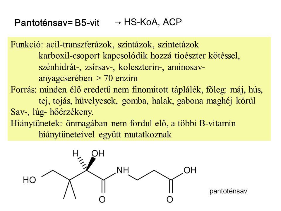 Funkció: acil-transzferázok, szintázok, szintetázok