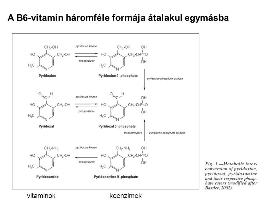 A B6-vitamin háromféle formája átalakul egymásba