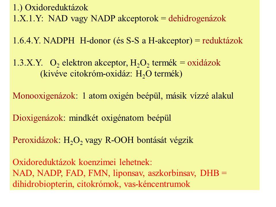 1.) Oxidoreduktázok 1.X.1.Y: NAD vagy NADP akceptorok = dehidrogenázok. 1.6.4.Y. NADPH H-donor (és S-S a H-akceptor) = reduktázok.