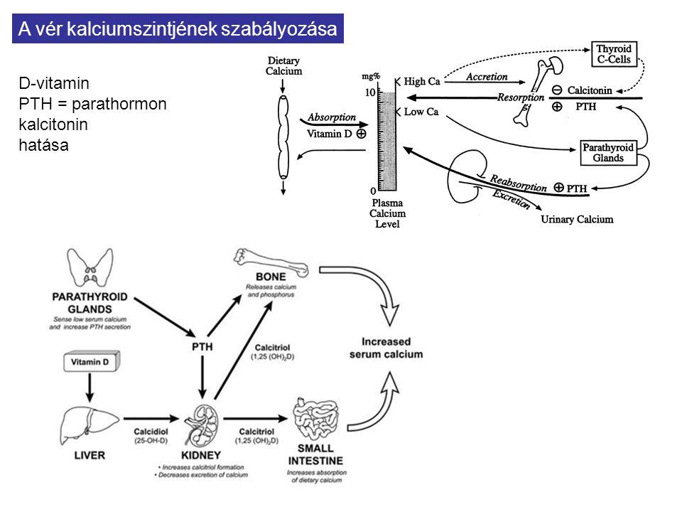 A vér kalciumszintjének szabályozása