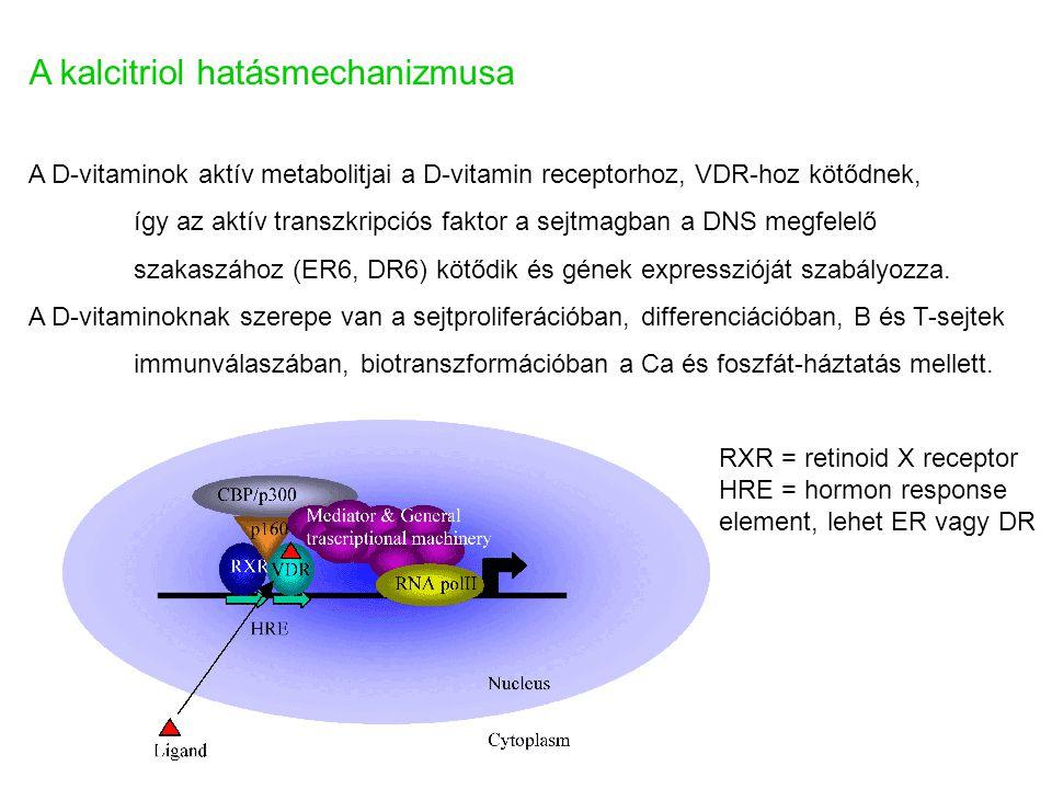 A kalcitriol hatásmechanizmusa