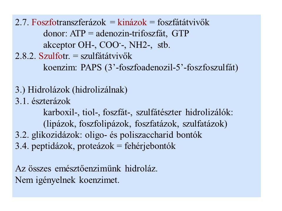 2.7. Foszfotranszferázok = kinázok = foszfátátvivők