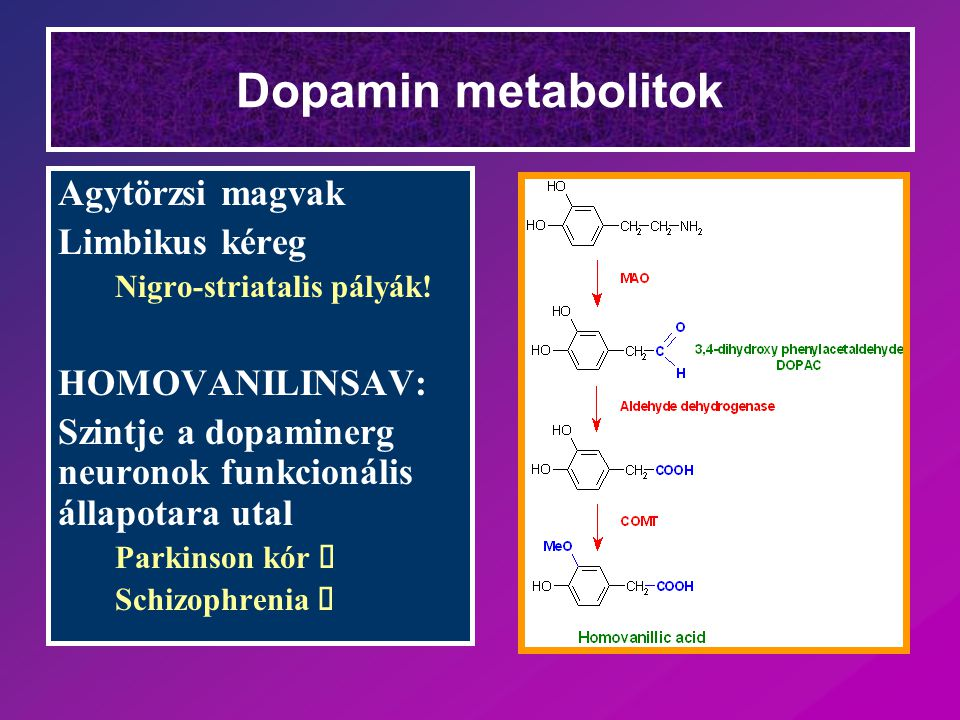 Dopamin metabolitok Agytörzsi magvak Limbikus kéreg HOMOVANILINSAV: