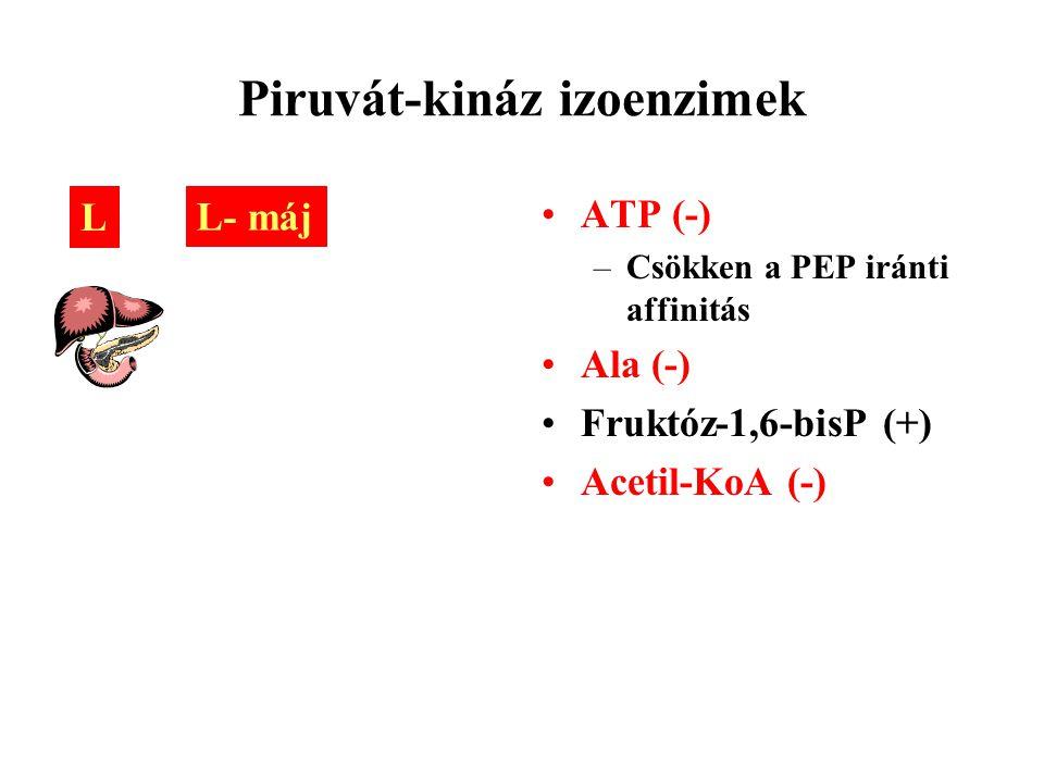 Piruvát-kináz izoenzimek