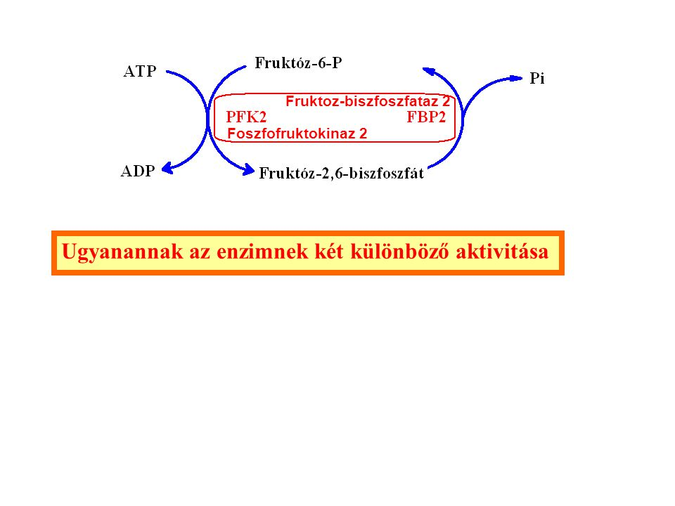 Ugyanannak az enzimnek két különböző aktivitása