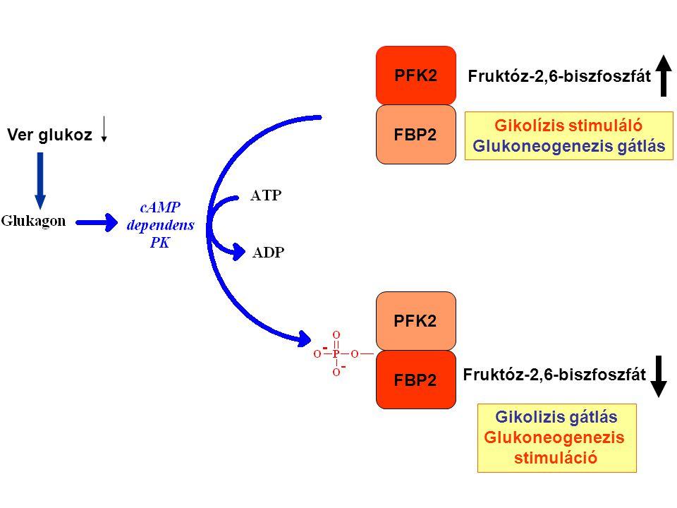 Glukoneogenezis gátlás