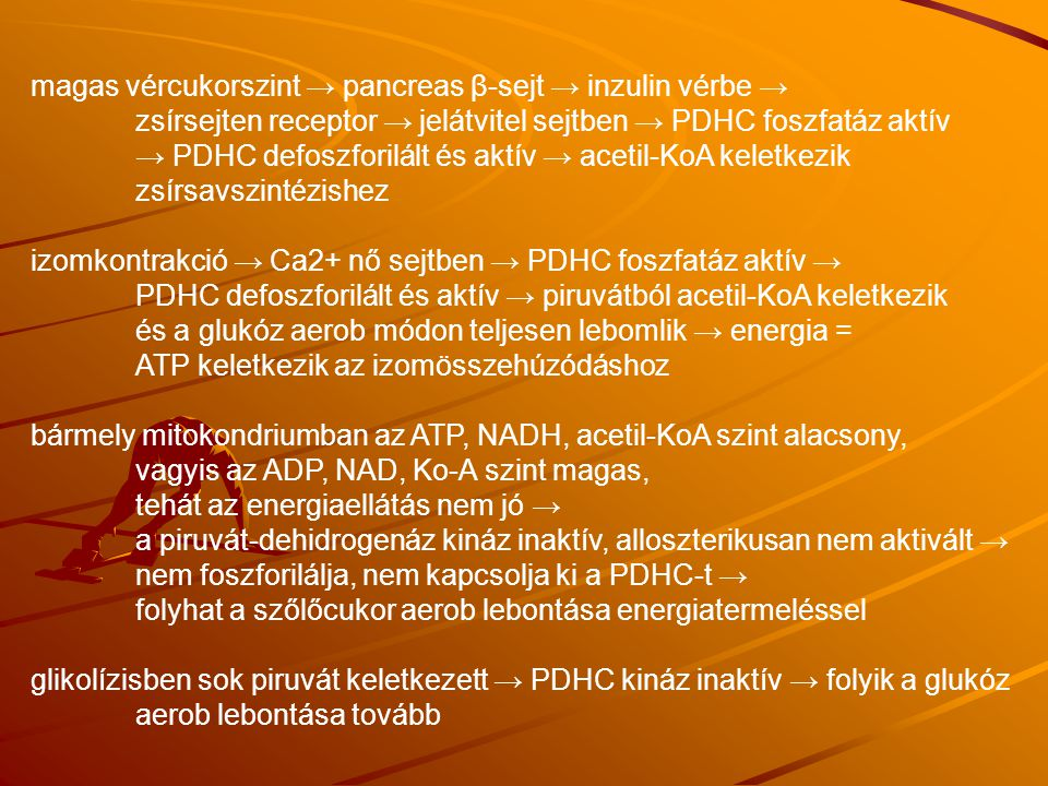 magas vércukorszint → pancreas β-sejt → inzulin vérbe →