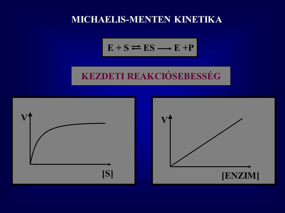 MICHAELIS-MENTEN KINETIKA KEZDETI REAKCIÓSEBESSÉG