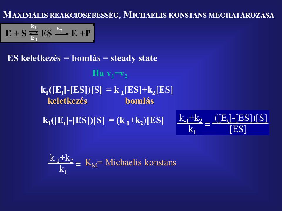 MAXIMÁLIS REAKCIÓSEBESSÉG, MICHAELIS KONSTANS MEGHATÁROZÁSA