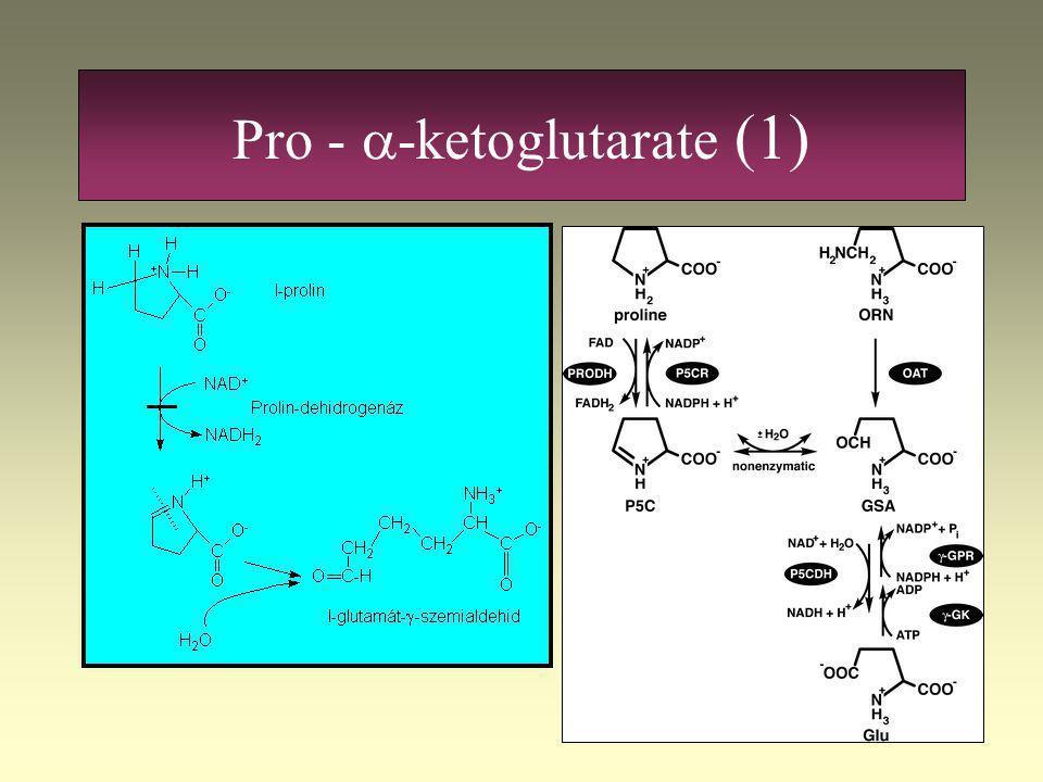 Pro - a-ketoglutarate (1)