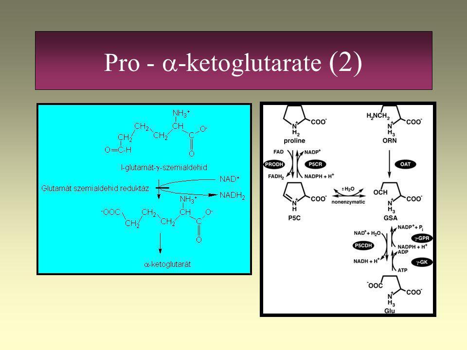 Pro - a-ketoglutarate (2)