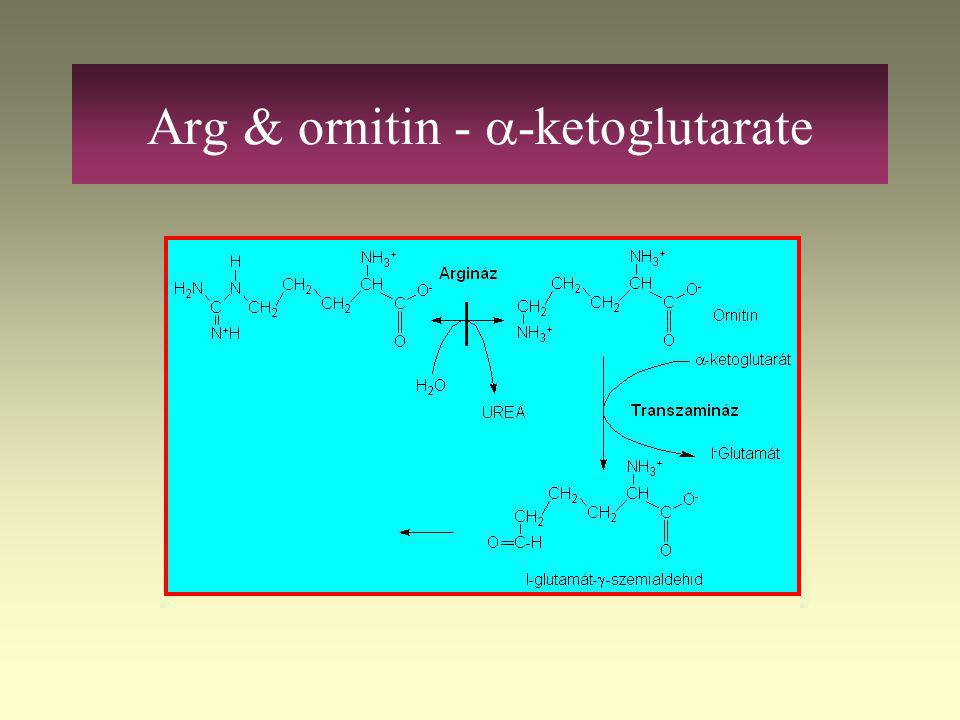 Arg & ornitin - a-ketoglutarate