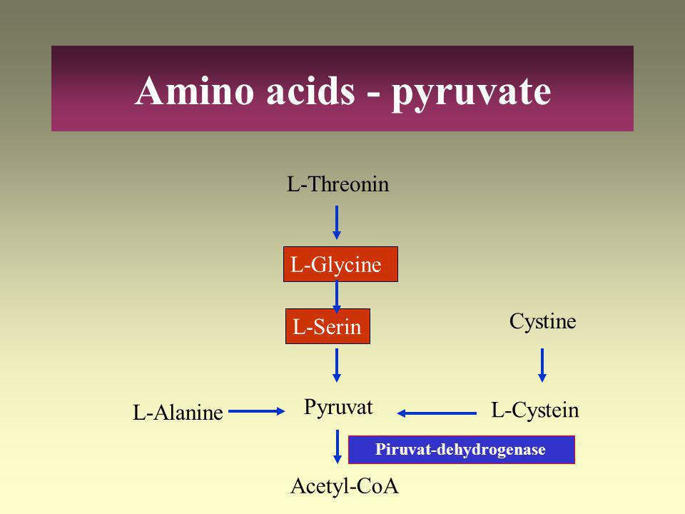 Piruvat-dehydrogenase