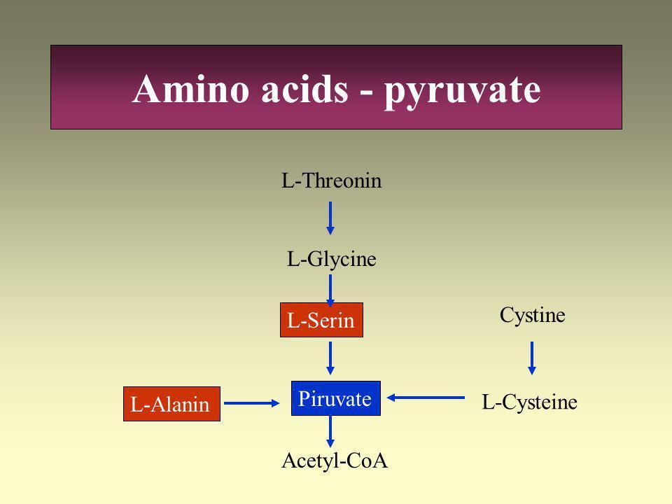 Amino acids - pyruvate L-Threonin L-Glycine Cystine L-Serin Piruvate