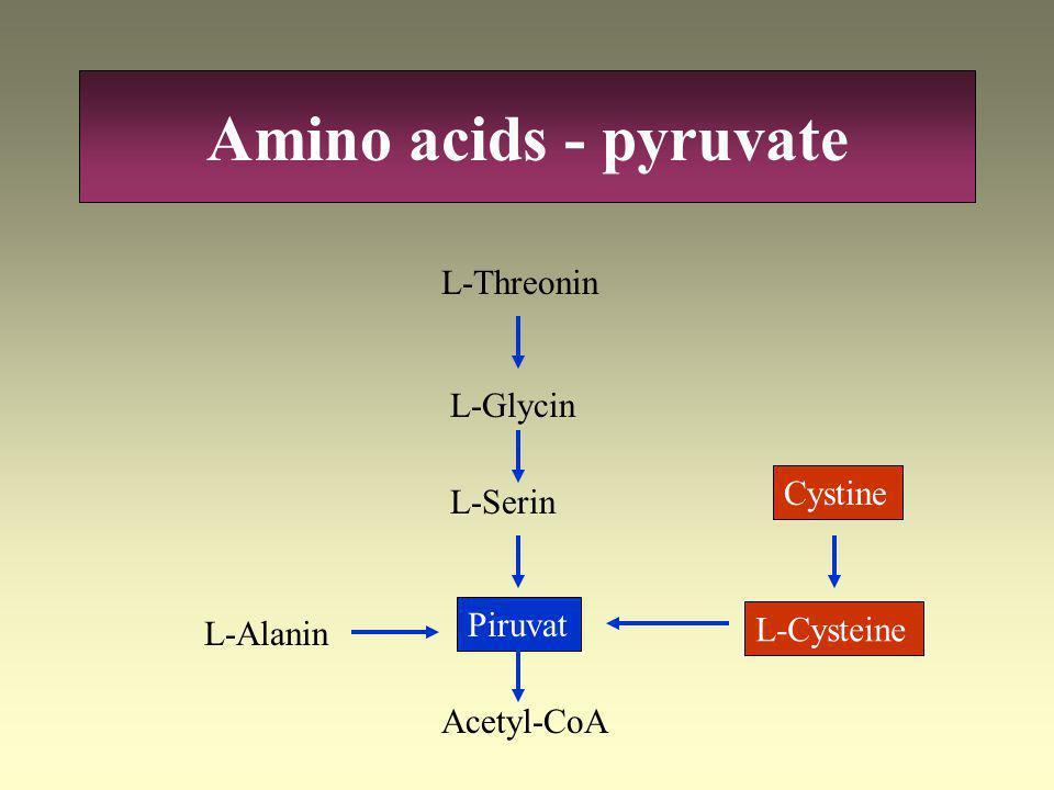 Amino acids - pyruvate L-Threonin L-Glycin Cystine L-Serin Piruvat