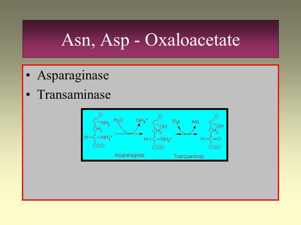 Asn, Asp - Oxaloacetate Asparaginase Transaminase