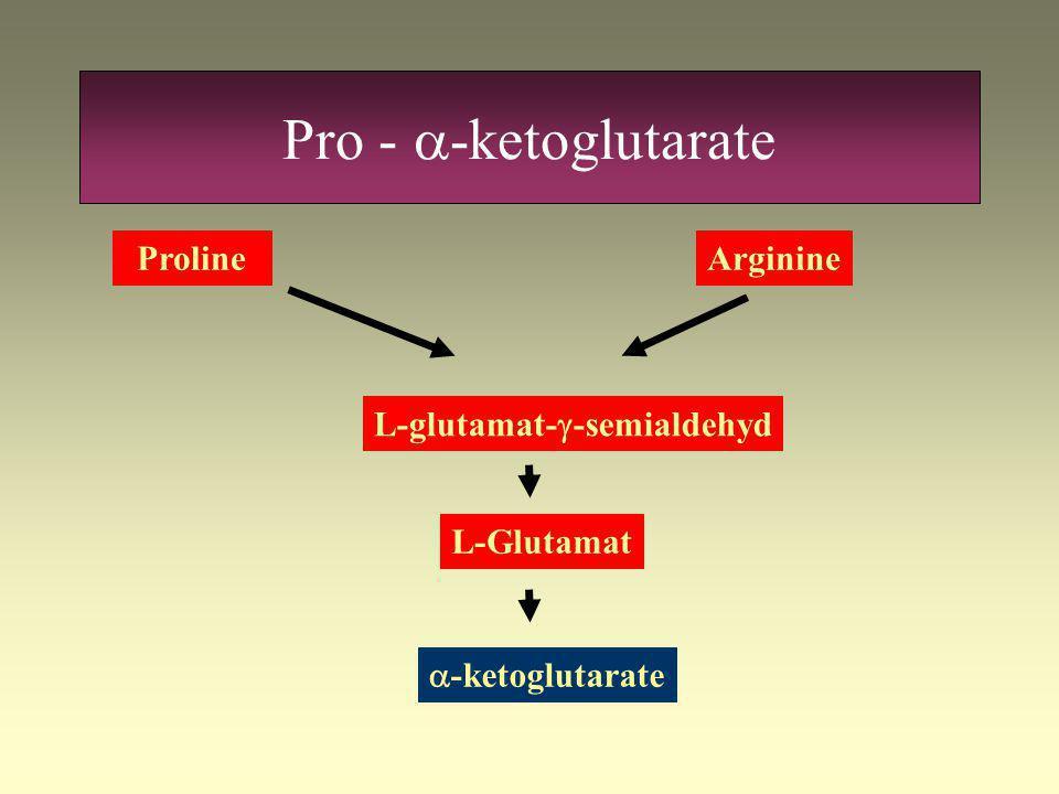 Pro - a-ketoglutarate Proline Arginine L-glutamat-g-semialdehyd