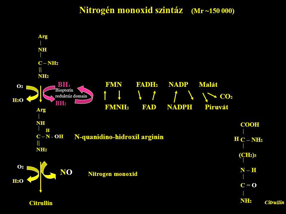 Nitrogén monoxid szintáz