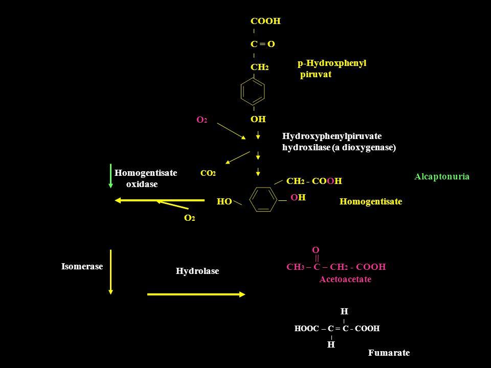 = COOH C = O CH2 p-Hydroxphenyl piruvat O2 OH Hydroxyphenylpiruvate