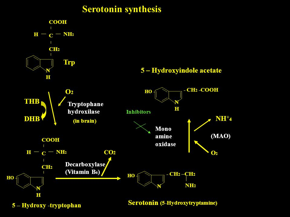 Serotonin synthesis Trp 5 – Hydroxyindole acetate O2 THB DHB NH+4