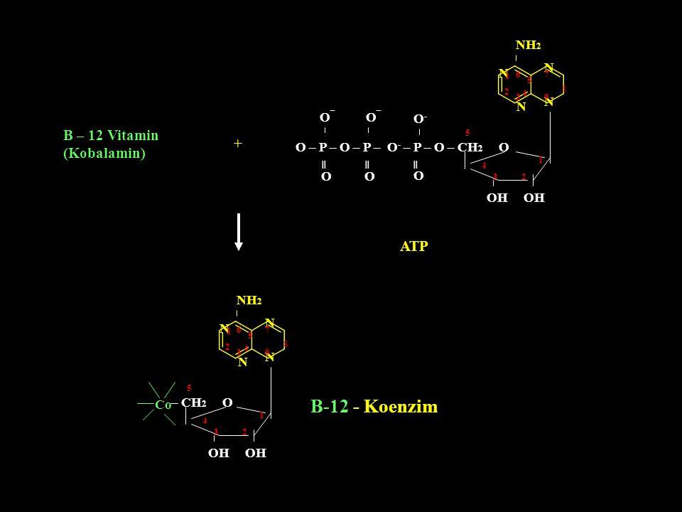 B-12 - Koenzim B – 12 Vitamin (Kobalamin) + ATP NH2 N N N N O¯ O¯ O-