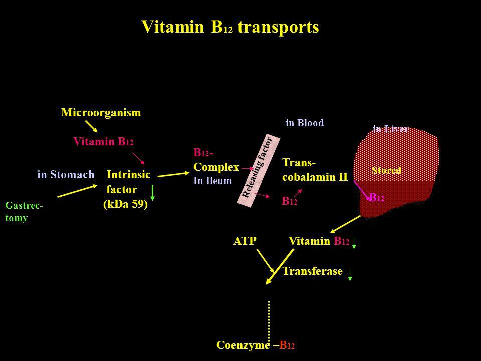 Vitamin B12 transports Microorganism Vitamin B12 B12- Complex Trans-