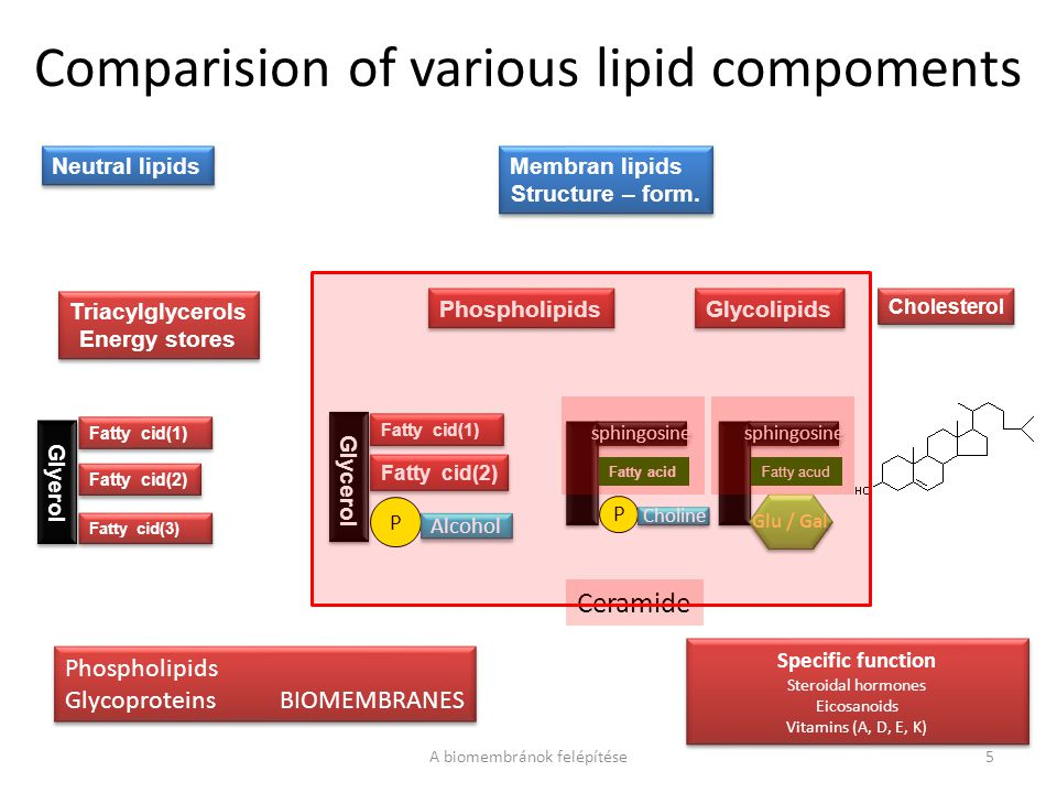 Comparision of various lipid compoments