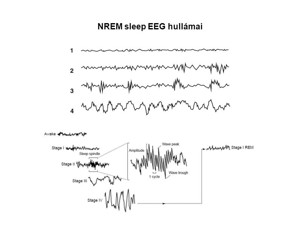 NREM sleep EEG hullámai