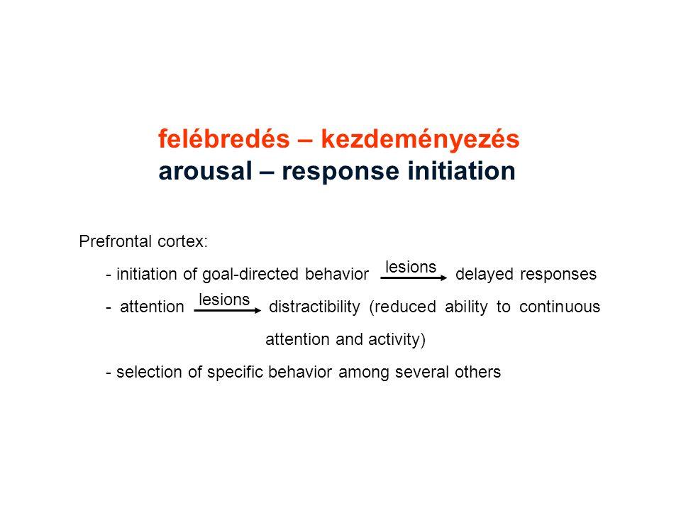 felébredés – kezdeményezés arousal – response initiation