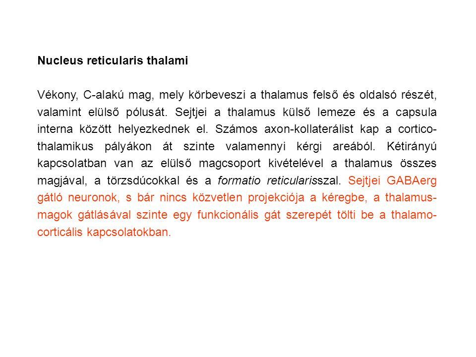 Nucleus reticularis thalami