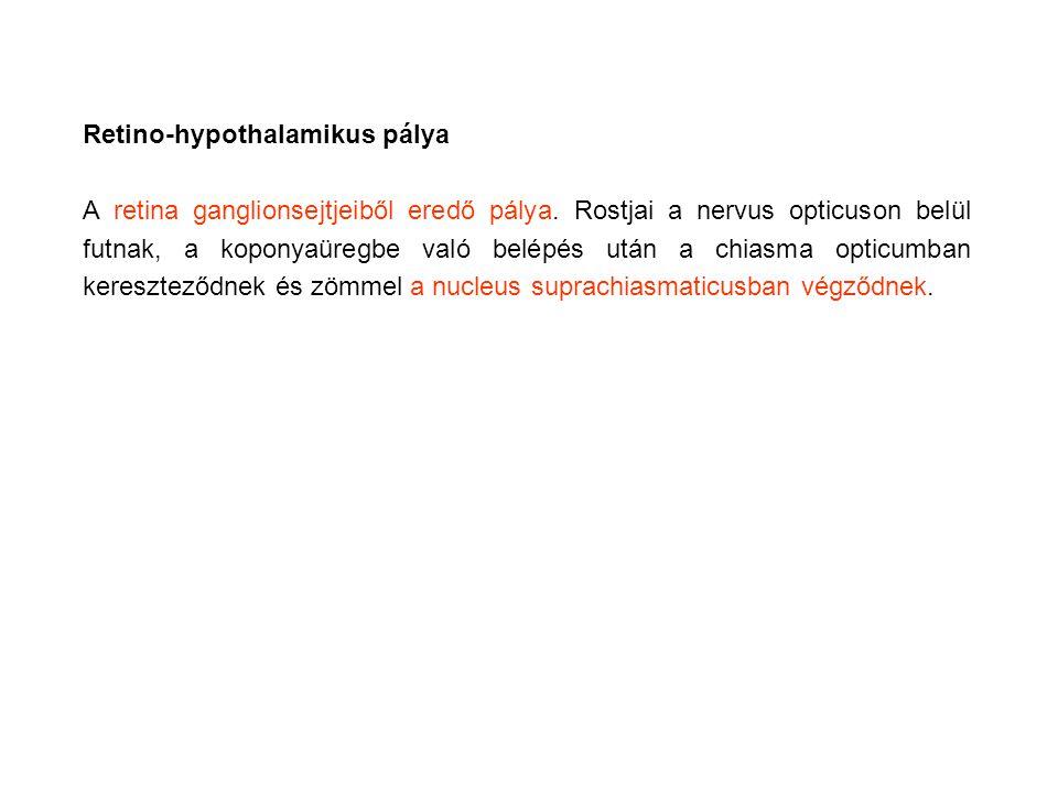 Retino-hypothalamikus pálya
