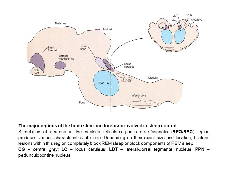 Kandel_page940_fig47-4-300dpi.jpg The major regions of the brain stem and forebrain involved in sleep control.