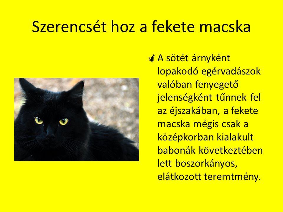 Szerencsét hoz a fekete macska