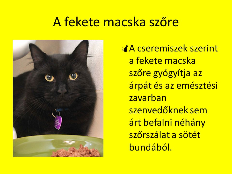 A fekete macska szőre