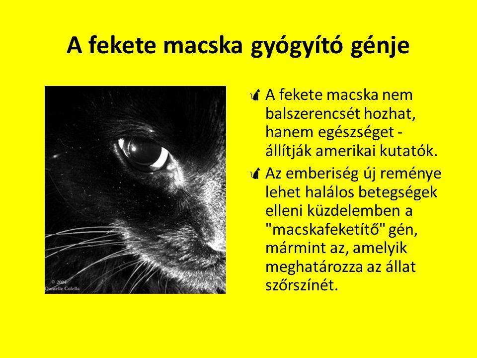 A fekete macska gyógyító génje