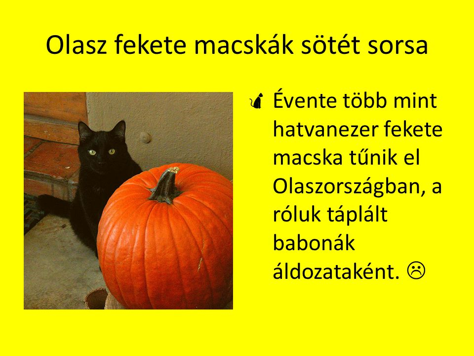 Olasz fekete macskák sötét sorsa
