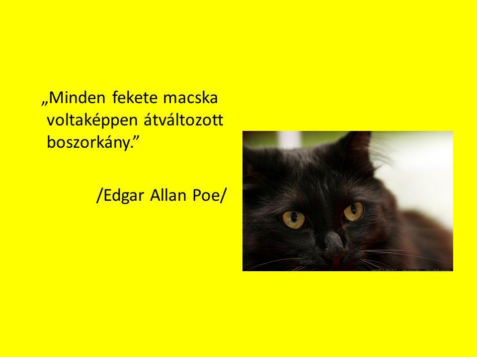 """""""Minden fekete macska voltaképpen átváltozott boszorkány"""