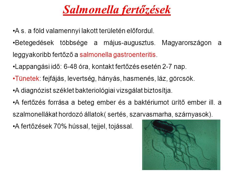 Salmonella fertőzések