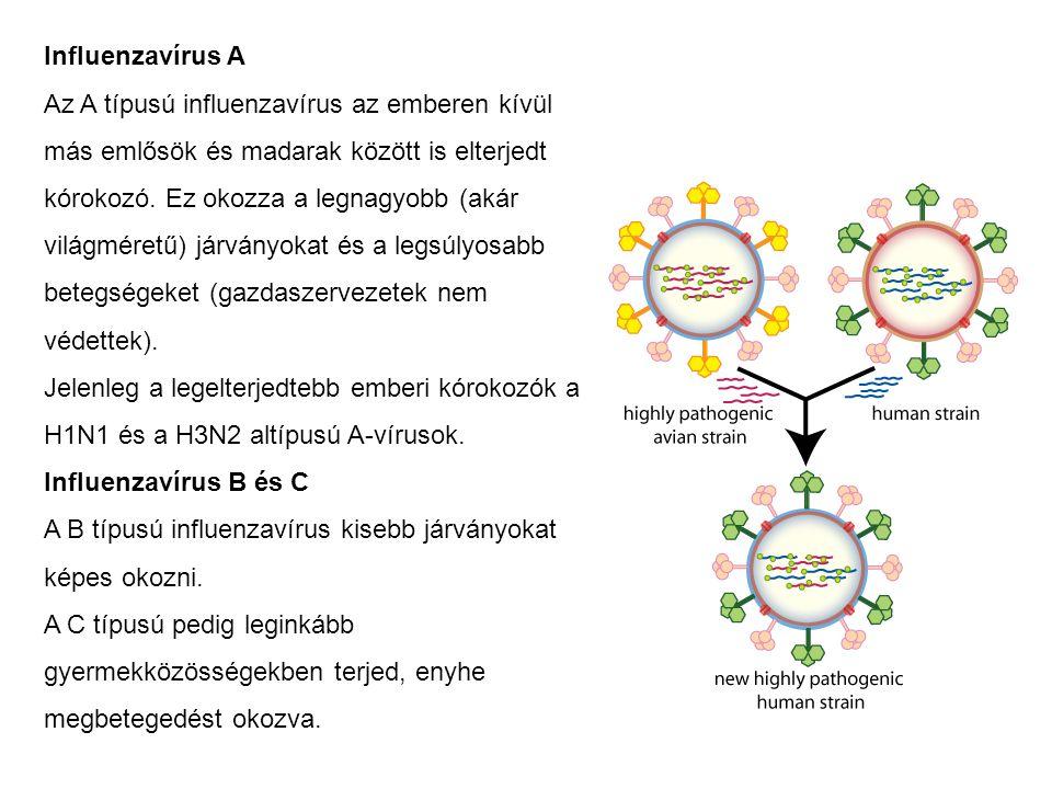 Influenzavírus A