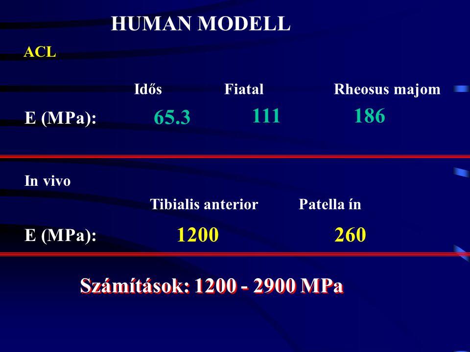 HUMAN MODELL 65.3 111 186 1200 260 Számítások: 1200 - 2900 MPa